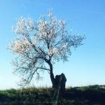 Un avant got de printemps  la croise dun cheminnaturehellip