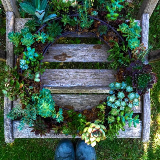 couronne succulentes  (9)
