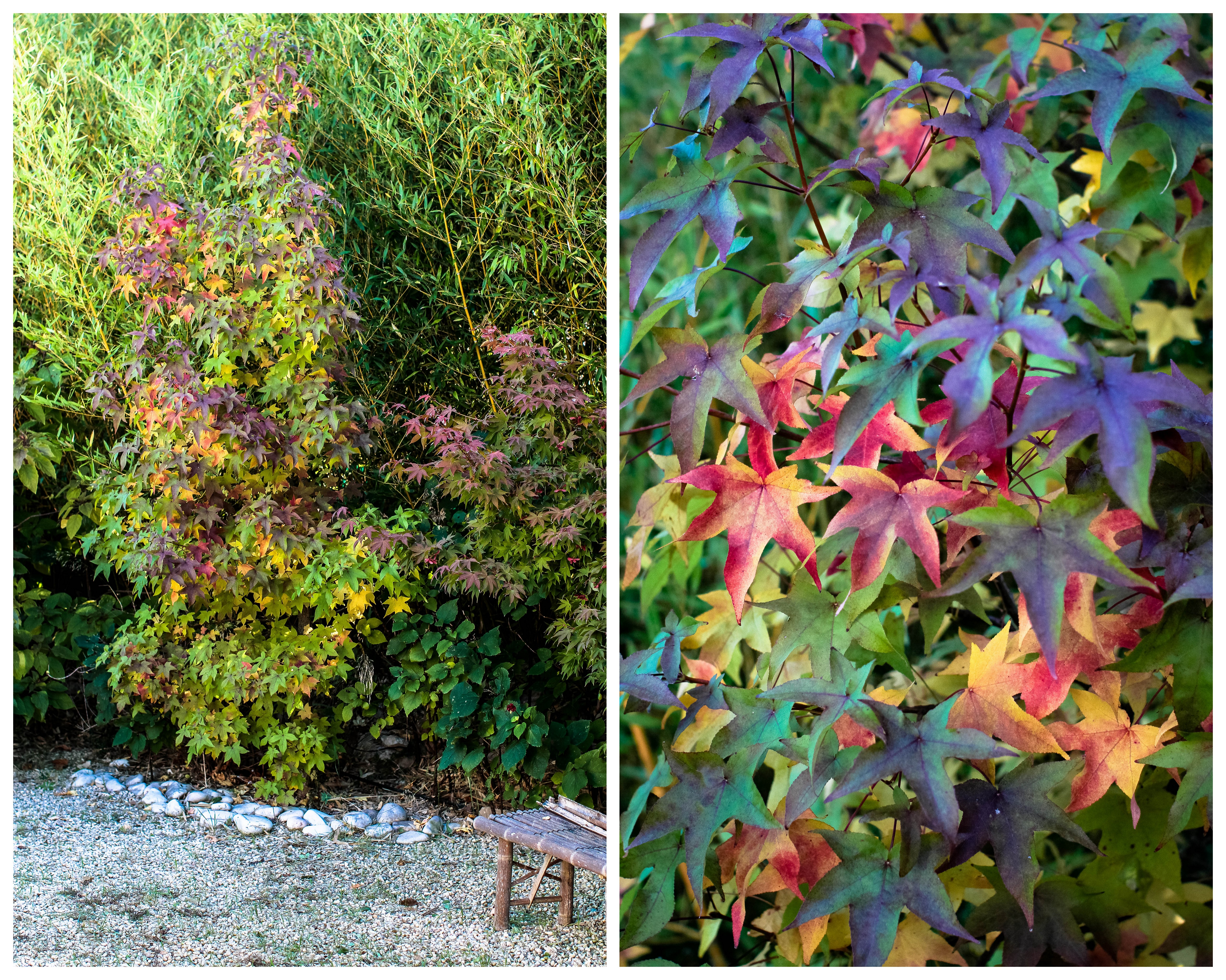 L 39 automne une explosion de couleurs au jardin quatre for Au jardin des couleurs