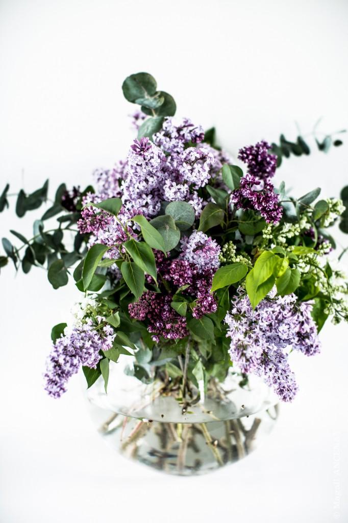 """Bouquet de Lilas """"Souvenir de Louis Spaeth"""""""