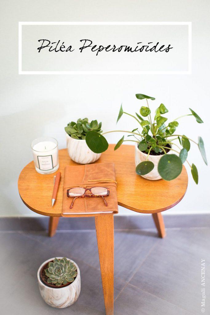 piléas la plante porte bonheur - Magali ANCENAY