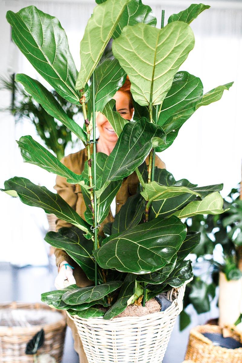 Rempotage des plantes d'intérieur - Quatre Saisons Au Jardin
