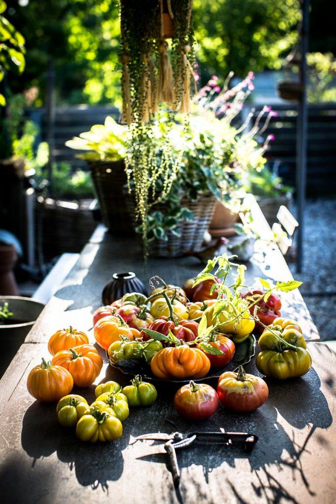 Récolte de tomate 2018 - Magali ANCENAY Photographe Culinaire
